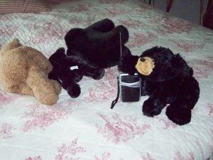 bears-3-003